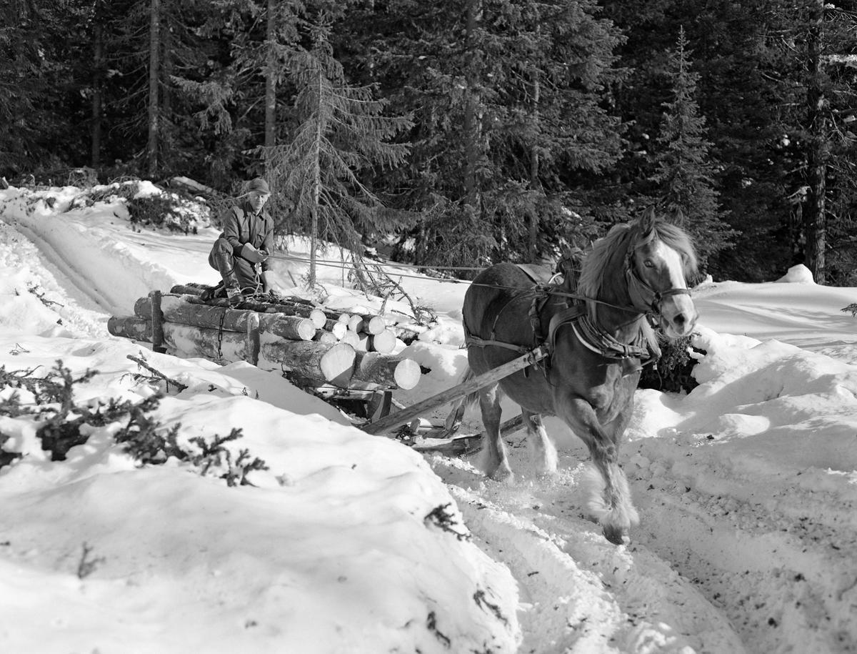 Arbeid i skogen. Kåre Østerhaug i Lundsberget i Trysil 1977. (Foto/Photo)