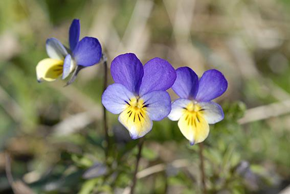 Blomster på Klevfos