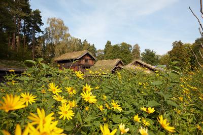 Landsbygda på  Norsk Folkemuseum,. Hus, trær, blomster.. Foto/Photo