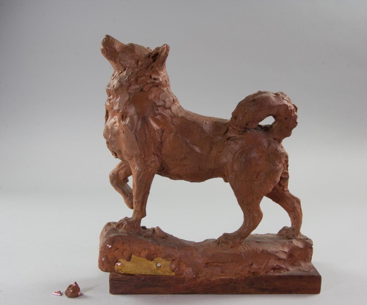 Studie av stående hund, Krakas. Helfigur med ena frambenet upplyft.