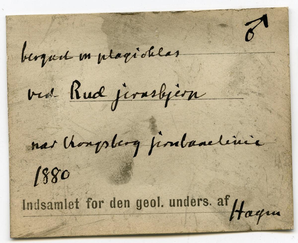 Etikett på prøve: No 49  Etikett i eske: Bergart m plagioklas ved Rud jernskjerp nær Kongsberg jernbanelinie. 1880 Indsamlet for den geol. unders. af Hagen