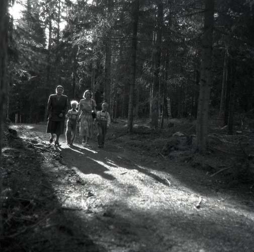 Det är en solig sommardag 8 juni 1952 och en kvinna har tagit med sina söner för att besöka deras mormor. Platsen är Ybsbo, Ljusdal och de fyra är på en promenad längs en skogsväg.
