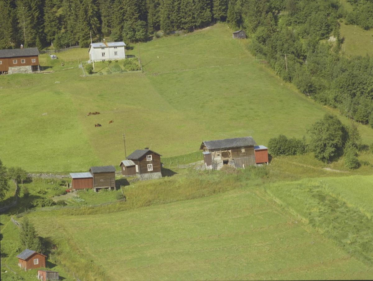 To småbruk, skog, Taraldhagen med Hagen bak, jorder, krøtter, Baklia, Østre Gasdal