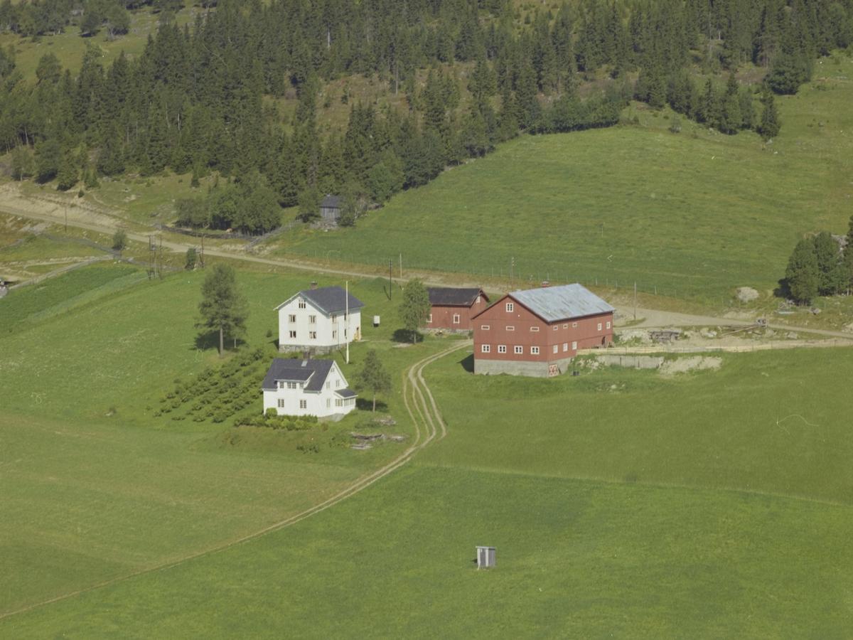 Kjos nørdre, bærbusker, Lishøgda, Øverbygda, Østre Gausdal