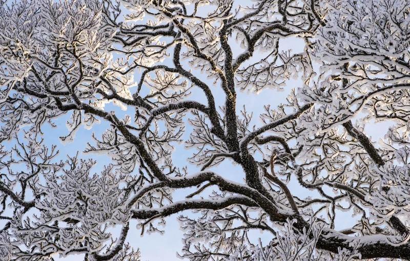 Desembervinner i fotokonkurransen Det fantastiske treet.