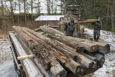Arbeid med restaurering av laftet tømmerbu på Prestøya, Norsk skogmuseum. Kvannstranddamkoia.