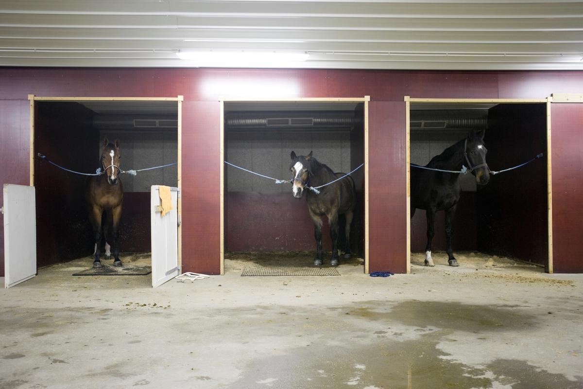 Svømme- og rehabiliteringssenter for hest. Hester venter på svømmeturen på senteret.