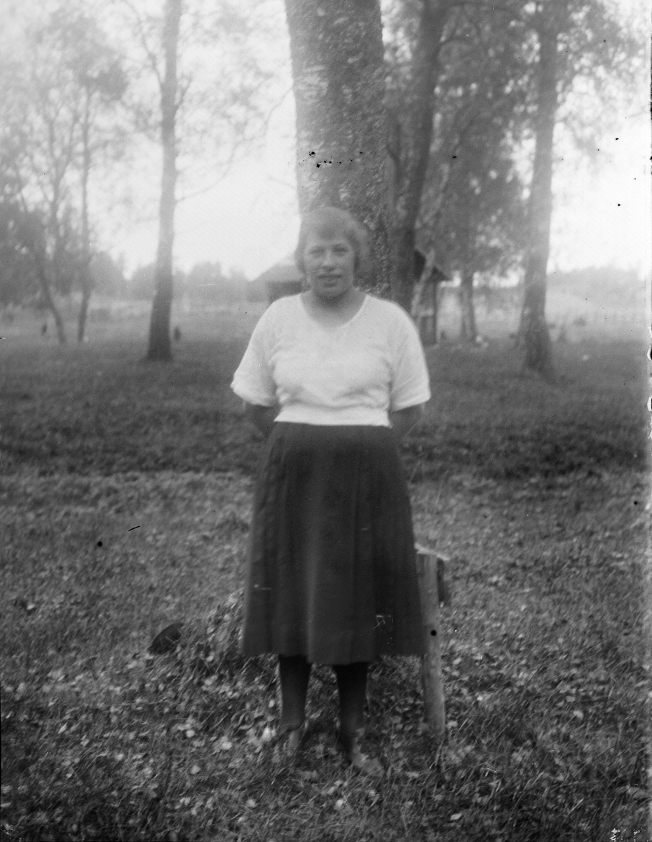 """Rut i Altuna mejeri ensam vid björken"", Altuna socken, Uppland 1922"