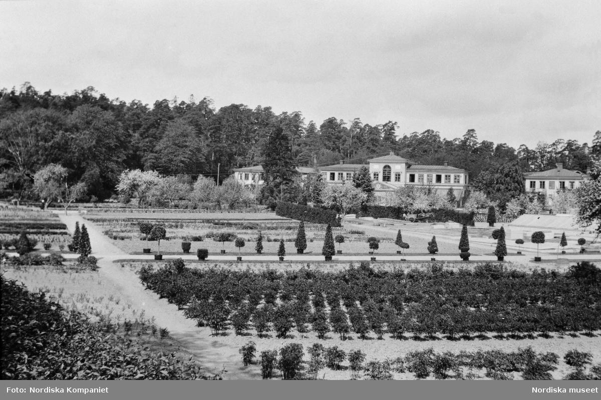 """""""NK:s trädgårdar i Haga. Utebild."""" Byggnader och odlingar."""