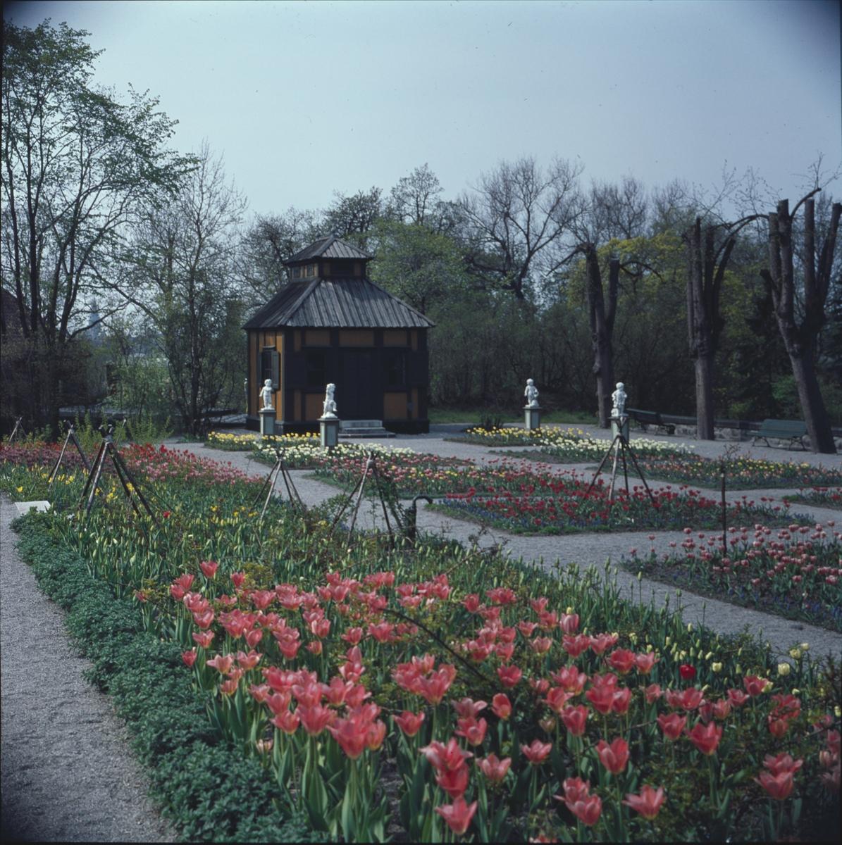 Blommande vårblommor i Rosenträdgårdens välskötta rabatter. I bakgrunden beundrar Swedenborgs lusthus fyra figurer som dansar i den färgrika blomsterprakten.