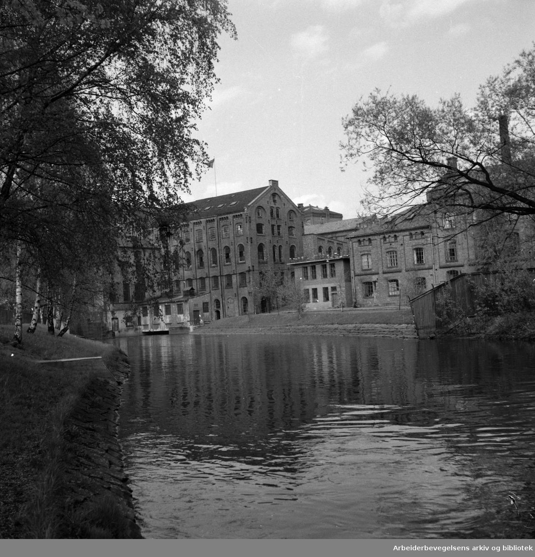 Akerselva. Grünerhagen. Mai 1952