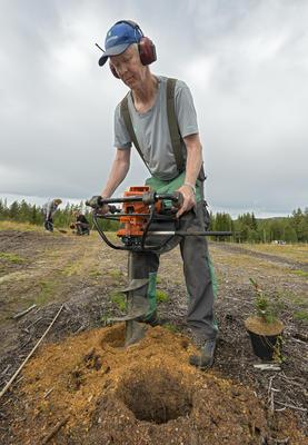 På bildet er Bjørn Hageberg fra Skogfrøverket i gang med å opparbeide frøplantasje for gran for bruk ved etablering av ny fjellskog. Skogfrøplantasjen er i Julussdalen i Elverum.