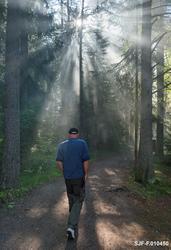 Vandringsmann på veg i gjennom skog der sola var i ferd med