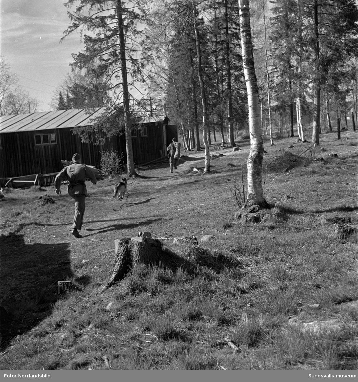 En grupp bilder från verksamheten på Arméns hundskola i Sollefteå.