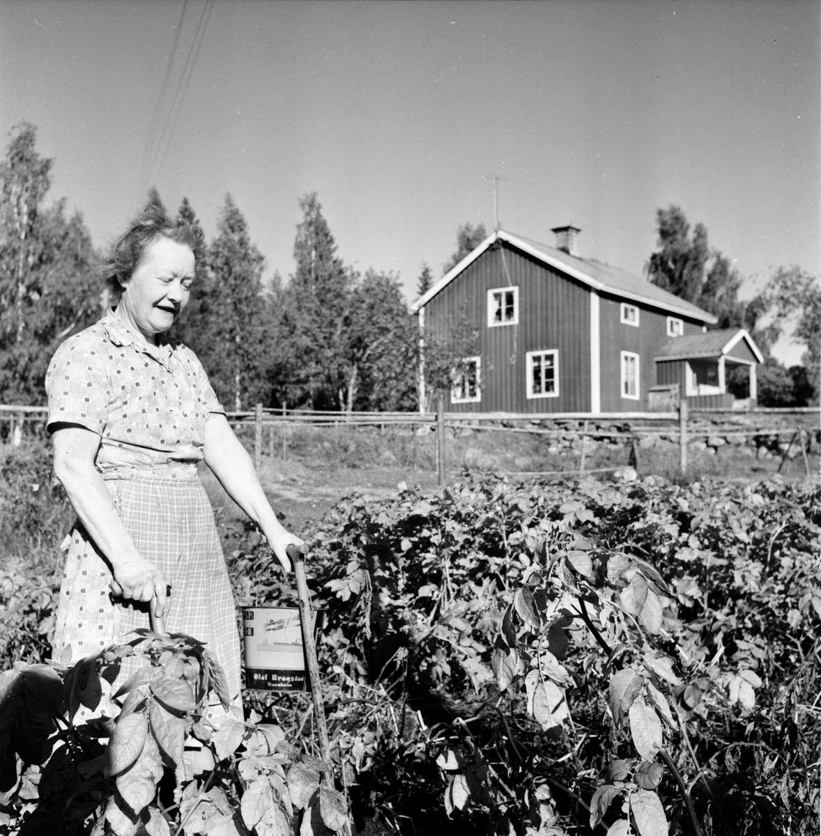 Rygge.  Jacobson, Matilda Blom poliosjuk 11/9-1963