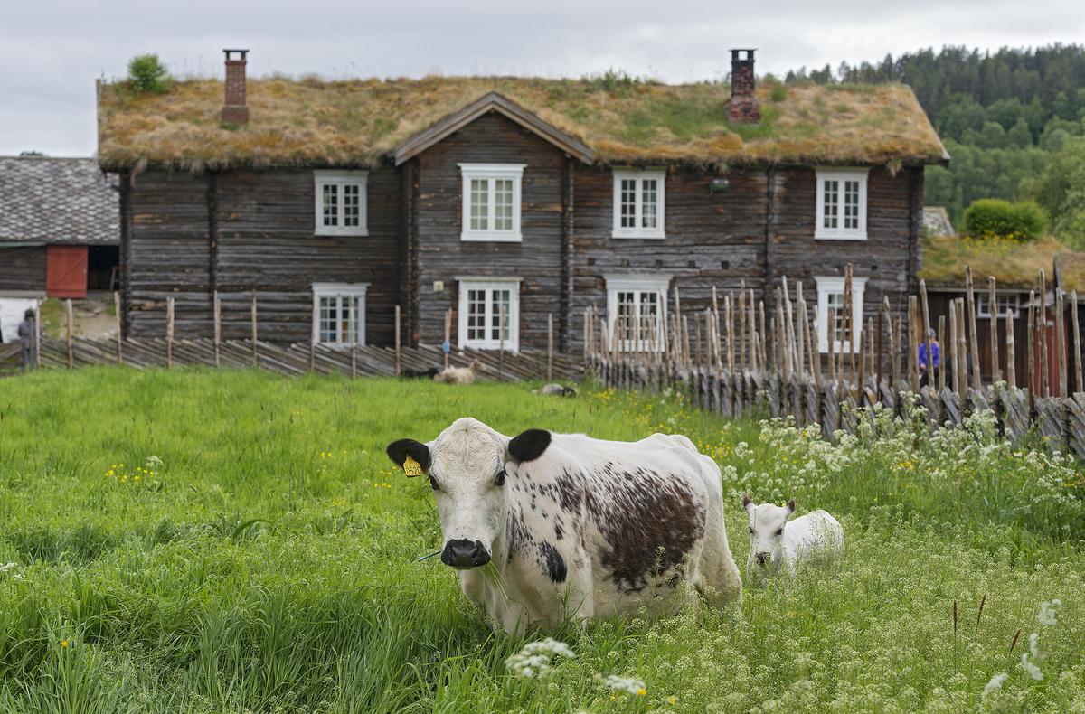 Musea i  Nord-Østerdalen