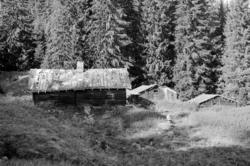 Tronshatten, Huse, Romedal almenning, seterbruk på Hedmarken