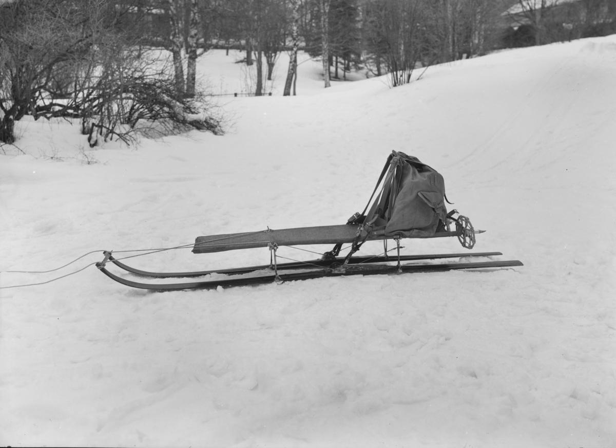 Skislede i Søndre Park.
