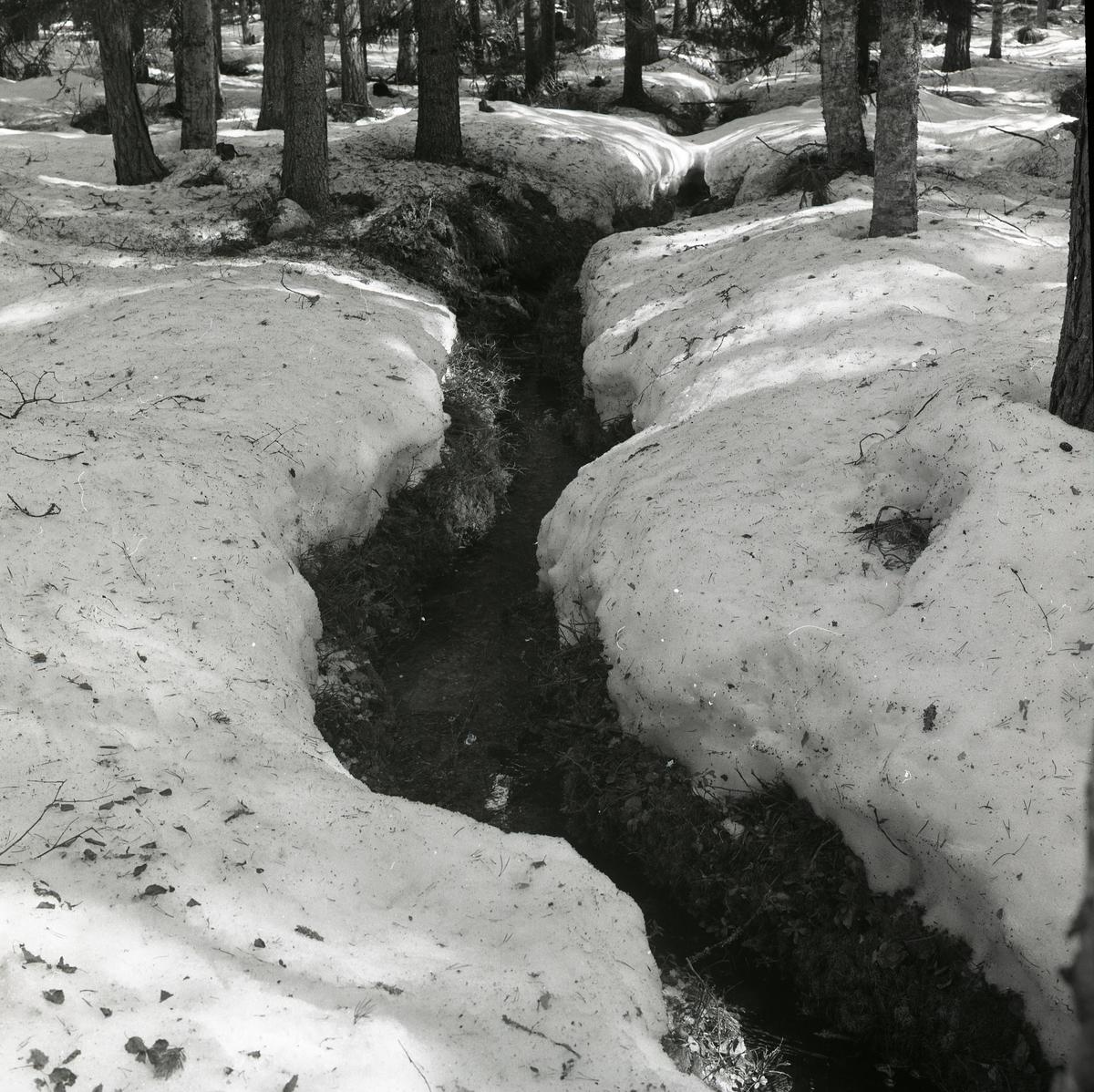 Ett vattendrag stäcker sig genom skogen vid Stråsjön den 19 april 1978.