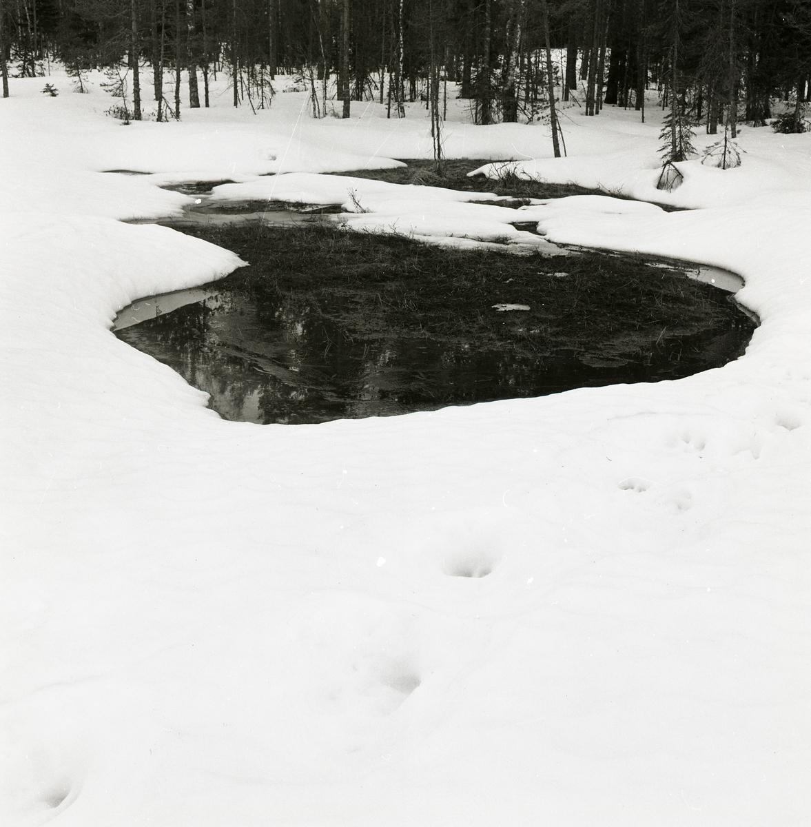 En vak i ån vid Stråsjön den 19 april 1978.