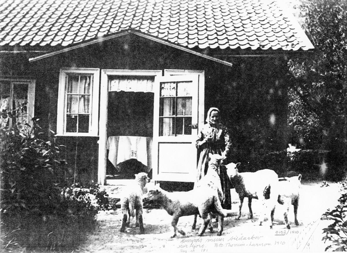 Äldre kvinna, mor Hjort,  framför ett mindre hus med fem får.