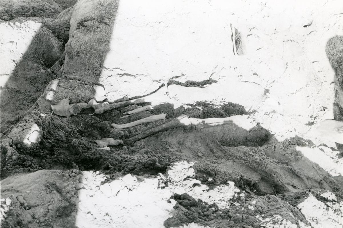 Strömsholm, Kolbäck sn. Delar av skelett, funnet vid ledningsgrävning.