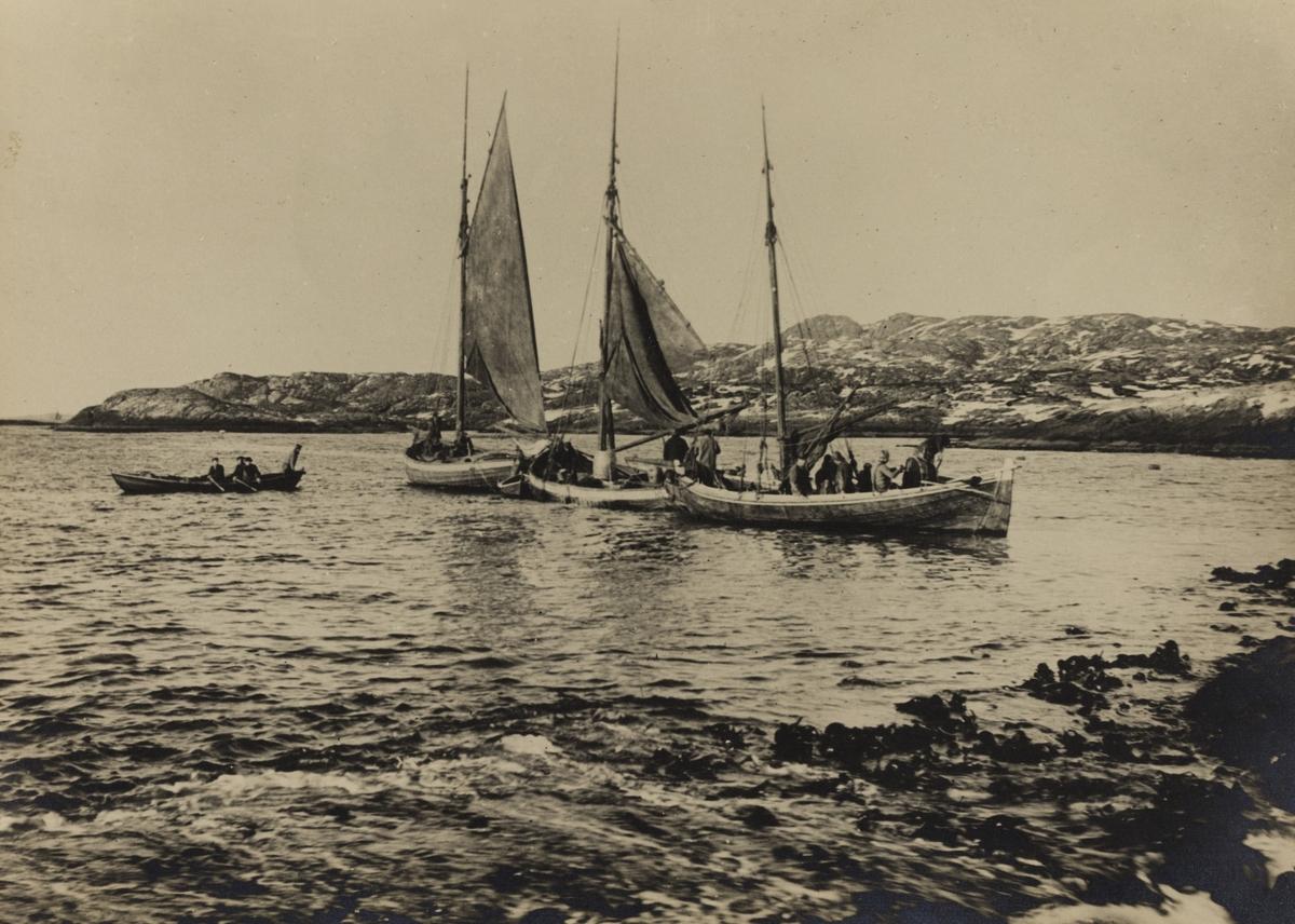 Omegnen III - fra vårsildfisket 1907 i Kvalsvik.