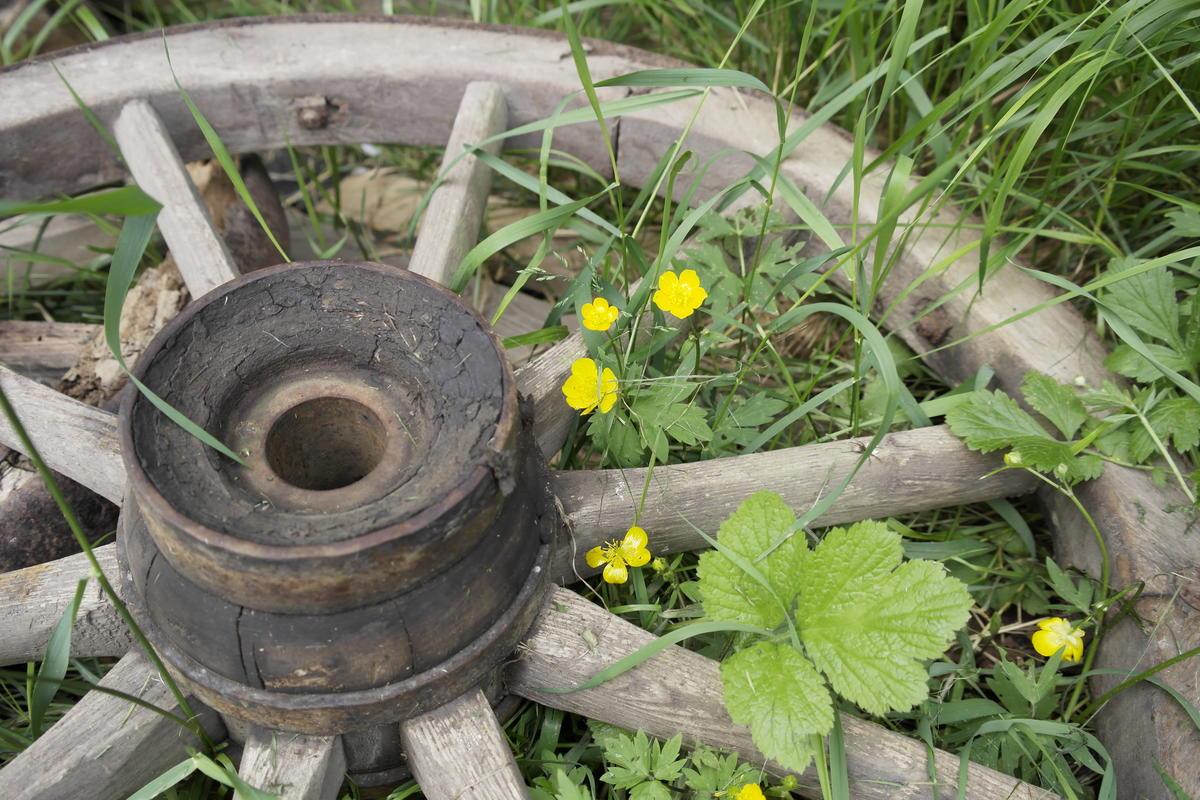 Hjul med smørblomster