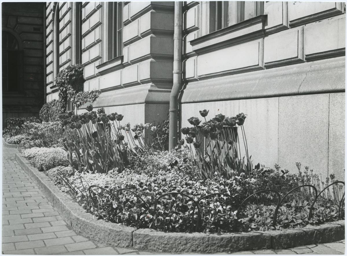 Blomsterprakt vid Stockholms Central.