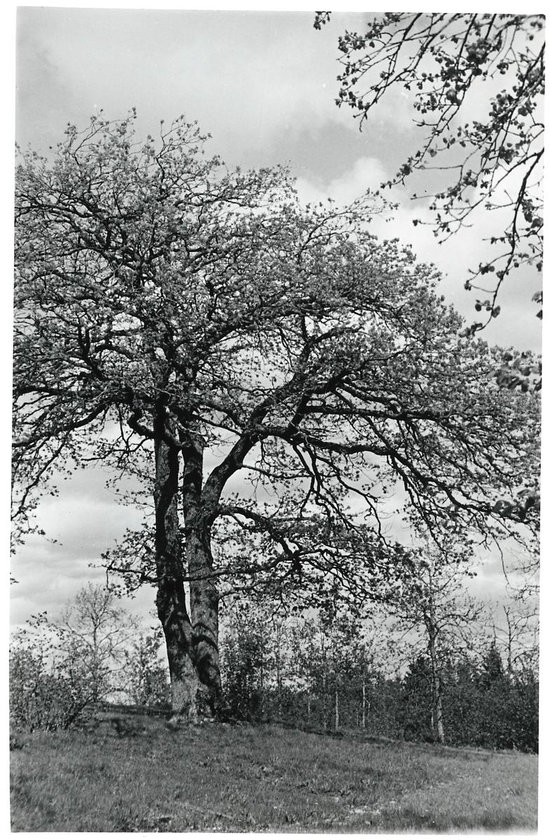 Träd.