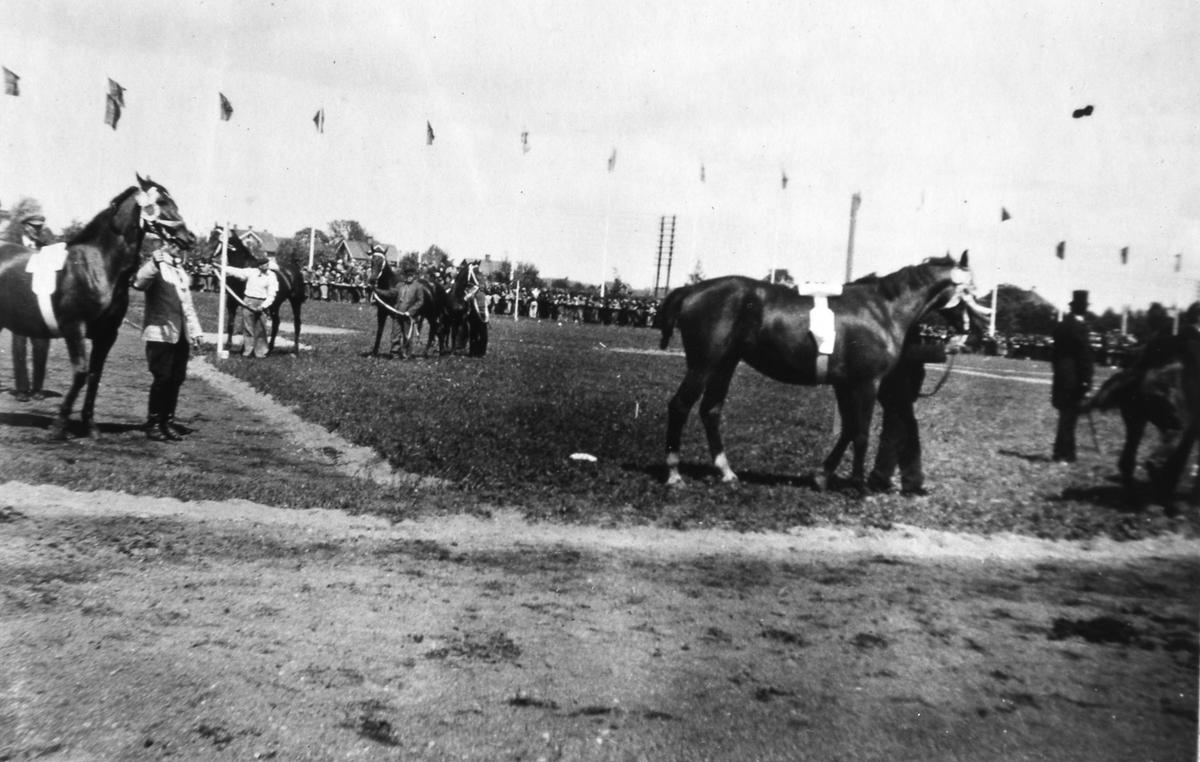 Lantbruksutställningen är ett inslag i Arbogautställningen. Här visas hästar. Flaggorna är hissade.