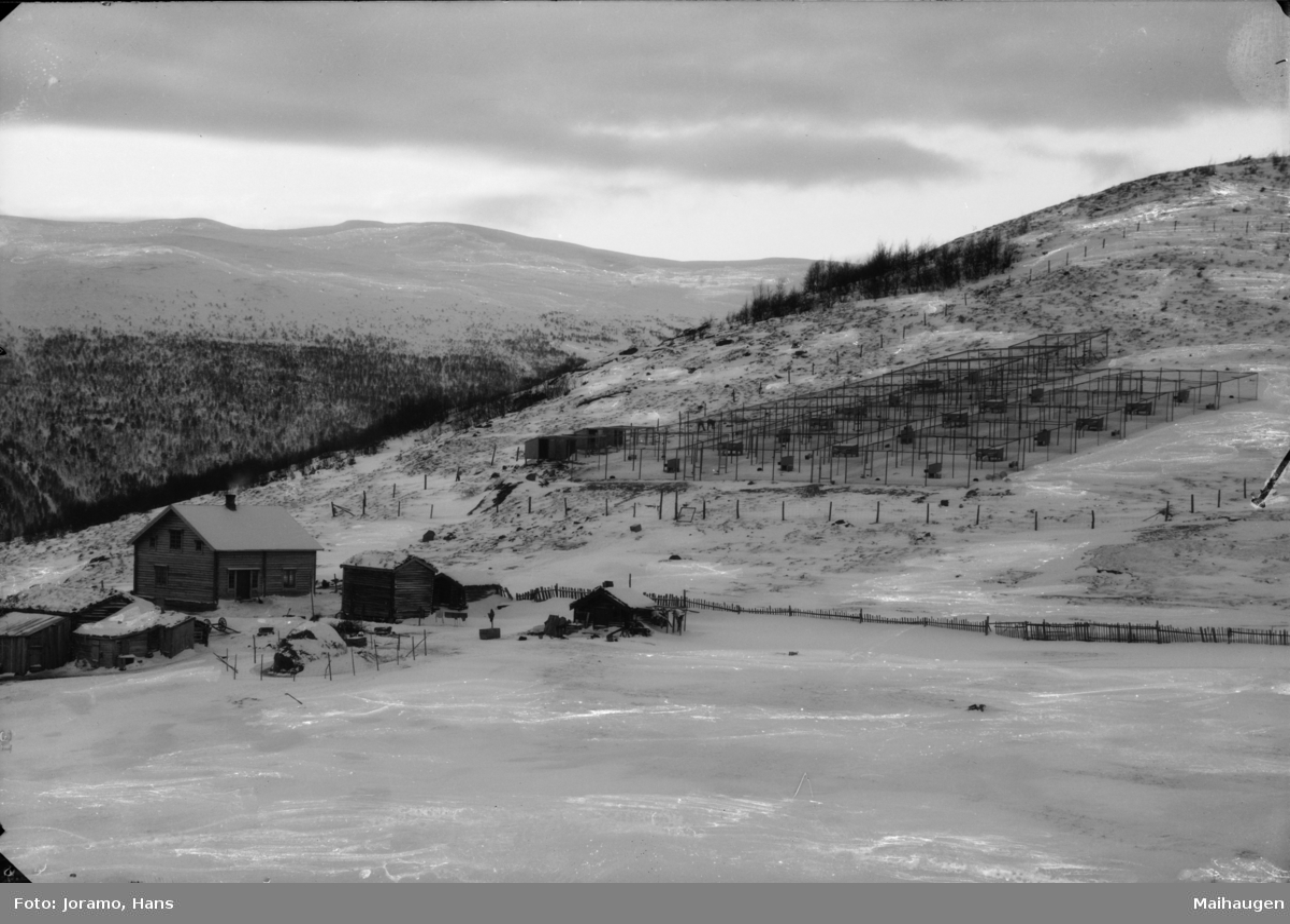 Revfarn i fjellside, vinterbilde