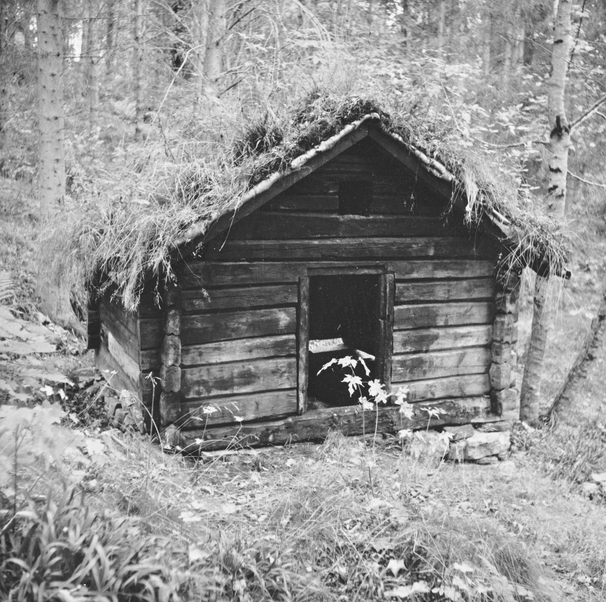 Prospektfotografi av tørkestova fra Storvika i Ørskog som nå står på Sunnmøre Musem. Denne ble bygd trolig i begynnelsen av 1800-tallet.