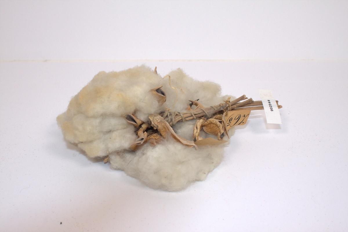 Bomullskvist