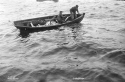 Prot: Lofotfiske, fisken hales in