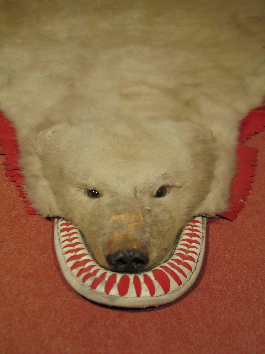 Utbrettet bjørnefell med utstoppet hode. Klør på fire labber. Pelsen er noe slitt på hodet og en flanken. Undersiden er fôret med rødoransje plysj. Fra hode mot forlabbene kantet med rød filt, klipt i tunger. Det samme mellom baklabbene. Innfelt halvmåneformet rød filt med hvite og røde dusker festet gjennom til fôret, i hvert halve bakstykke. Rundt kjevepartiet en tykk fôret semsket skinnkant. Klippet opp til rødt filtunderlag.