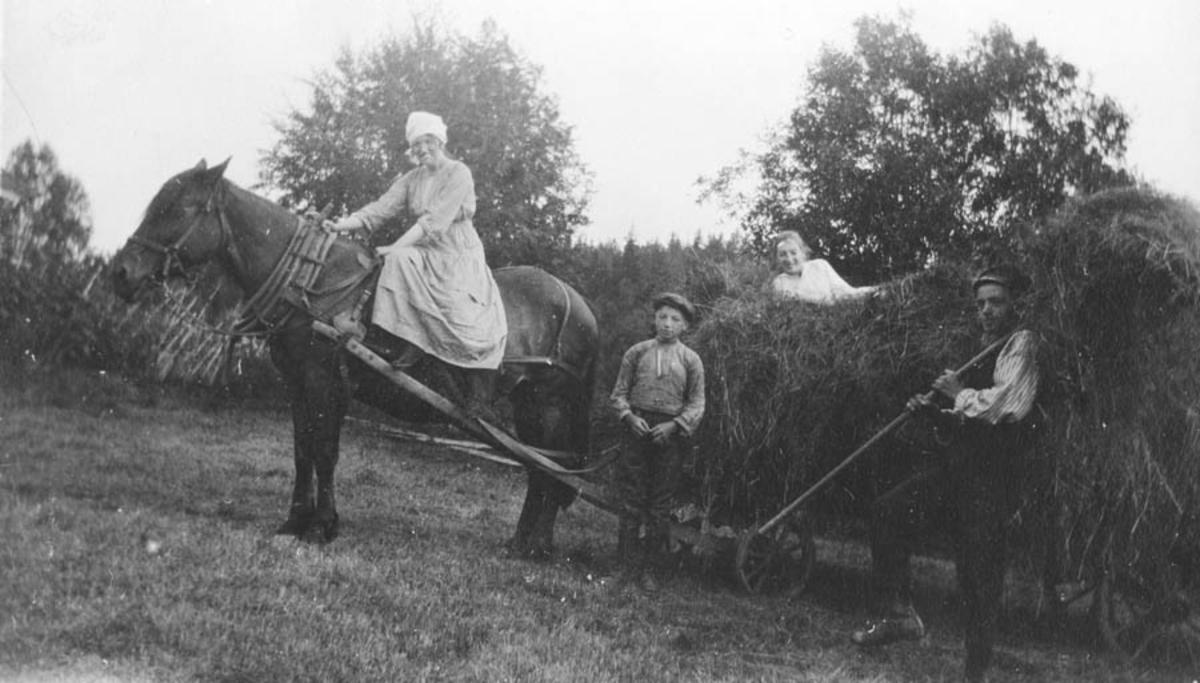 Innhøsting. Innkjøring av høy med hest og høyvogn.