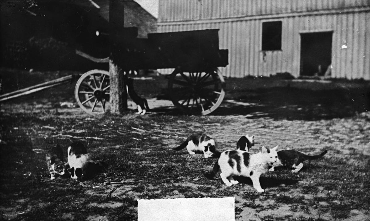 Katter, vogn, bryggerhus, melkeskyss
