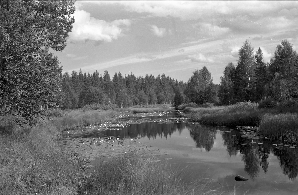 Landskap ved vann.