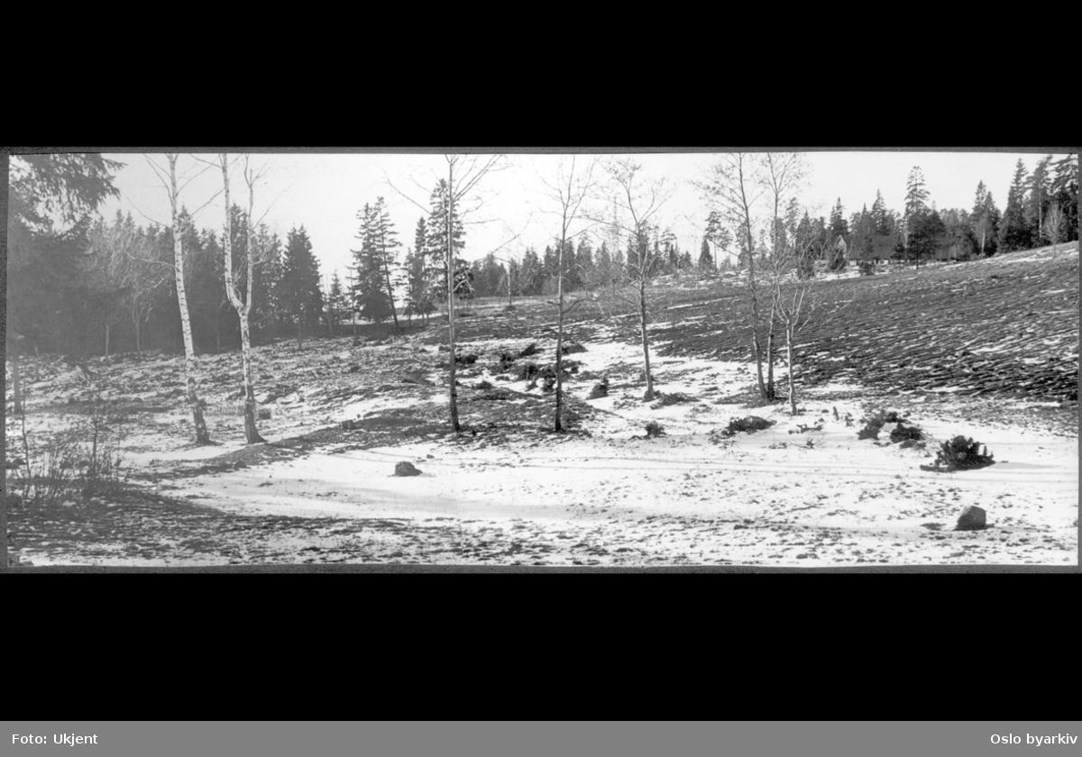 Opparbeidet og pløyet åker i hellende terreng omkranset av skog.