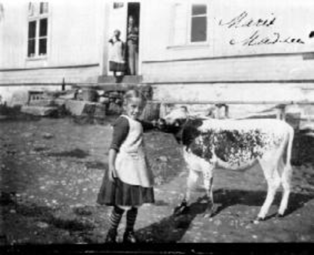 Marit Madsen klapper kalv. Ringsaker.