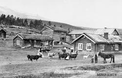 Gårdbruk - Sagvangen gård i nordenden av Savalen.