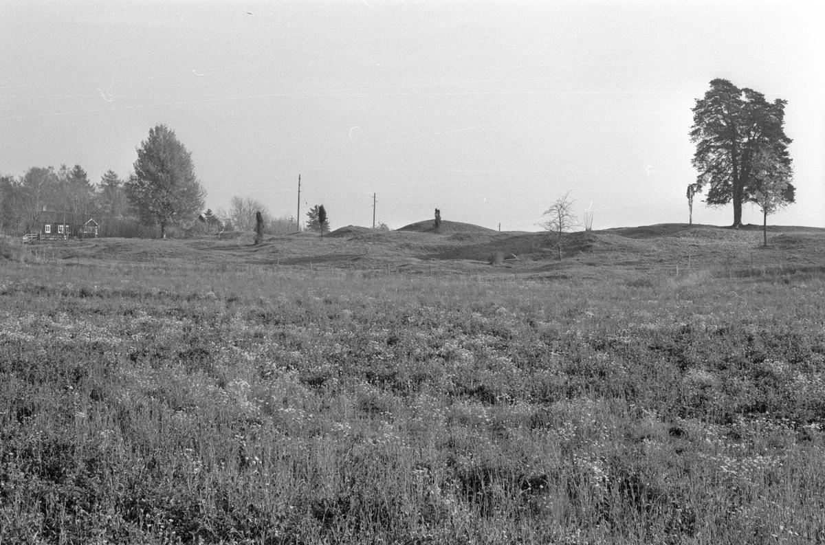 Gravfältet vid Husby, Lena socken, Uppland 1977