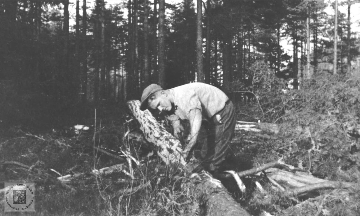 Skogsarbeid i Skålneset, Laudal. Olav K. Glomså i arbeid.