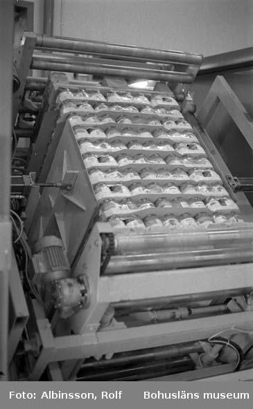 """Enligt fotografens noteringar: """"Den färdigpackade pallen transporteras vidare till den station där man vänder pallen upp och ner. Detta för att löken skall suga åt sig laken. Sedan är pallen färdig för leverans till centrallagret i Uddevalla. Därifrån körs det sedan ut till de olika grossisterna i landet.""""  Fototid: 1996-03-14."""