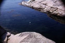 """""""Hållö. Havsvik i sydväst med tångruskor"""". ::"""