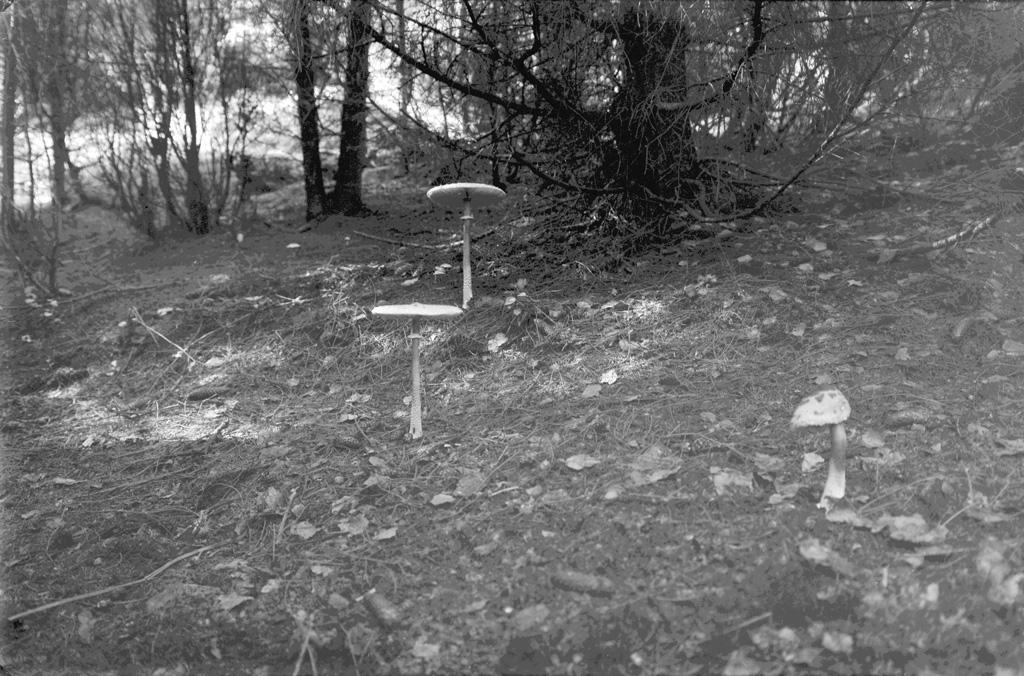 """Text till bilden: """"Hällekind 1950. Ferm""""."""