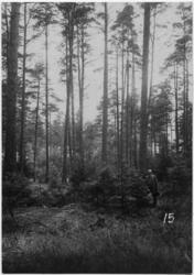 Skogskyrkogården Man i skog