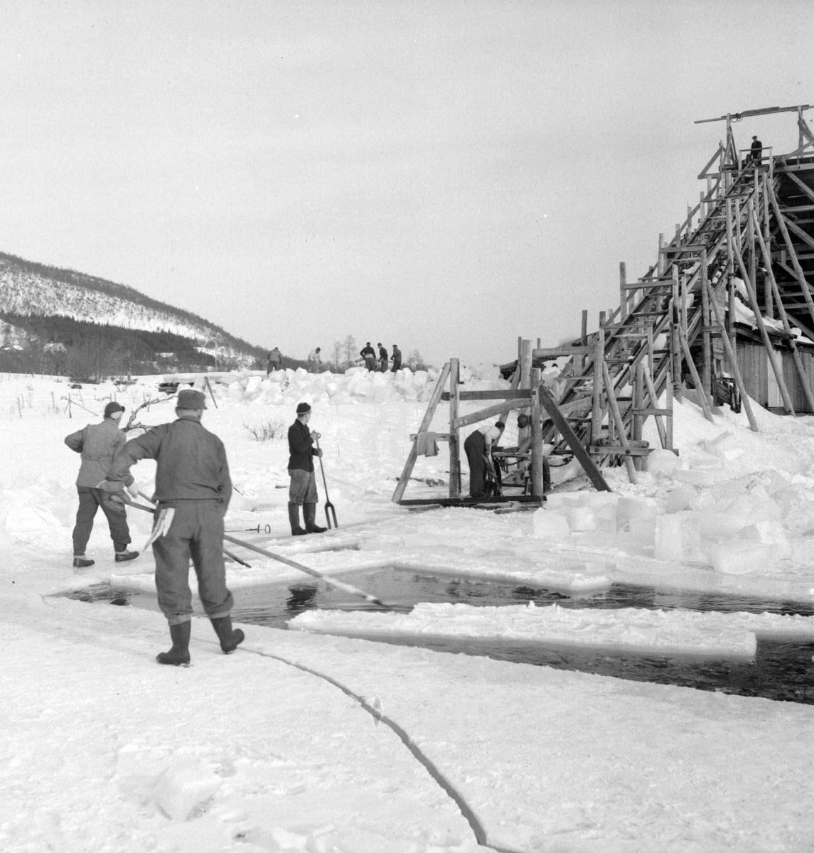 Isskjæring på Møkkelandsvannet, 1954. Isen skulle leveres ved kaia hos Bertheus J. Nilsen.