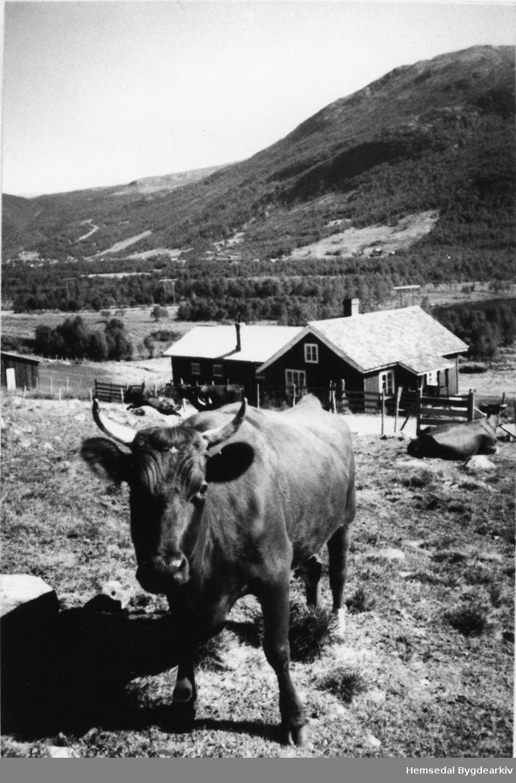 Stølen til Søre Viljugrein på Fagerset i Hemsedal ein gong på 1970-talet.